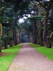 Ceder walk (grahamramsden52) Tags: trees ceder historic