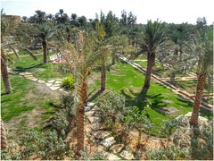 Lush Gardens of the historical Diriyah - Wadi Hanifah in Riyadh - Saudi Arabia. Paradise in the desert! (act.marketing) Tags: flowers history beauty gardens photo dubai desert outdoor border parks kingdom arab saudi arabia bloom dates riyadh wadi ibn  najd saud                              1818