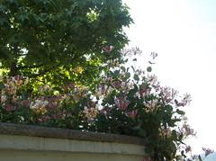176 (en-ri) Tags: flowers fujifilm fiori muretto fiorellini