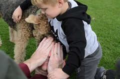 DSC_7843.jpg (CanionBeazley) Tags: park dog david andrew indi airedale