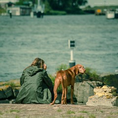 Ready when you are... (farflungistan) Tags: summer urban dog holland water netherlands amsterdam river waiting nederland streetphotography explore houthavens daydreaming 2015 ijmeer inexplore amsterdamphotoclub