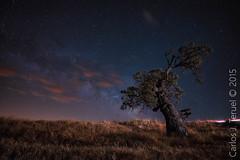 Cielos nocturnos de Murcia (Carlos J. Teruel) Tags: cloud nikon murcia le cielo nubes nocturnas milkyway 1835 vialactea nikon1835 xaviersam carlosjteruel d800e nikonafsnikkor1835mmf3545ged