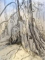 (24hertz) Tags: tree art pencil paper landscape sketch drawing graphite