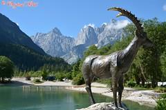 DSC_7144 (Original Loisi) Tags: panorama lake mountains alps nature landscape see view natur berge slovenia slovenija slowenien alpen gebirge steinbock kranjskagora julischealpen karawanken republikaslovenija kronau