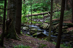 DSC_0489 (JN_Tetreault) Tags: trees plant tree water forest landscape woods nikon rocks outdoor connecticut ct funday waterfalls daytrip newthings nikoncamera deepinthewoods d7100