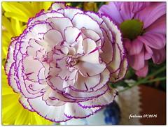Ramo 20150720 -clavel blanco jaspeado (ferlomu) Tags: algete ferlomu flor clavel flower