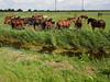 P7196257.jpg (Michiel Schutler) Tags: netherlands nl noordholland uitdam
