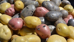 Potato Eyes (swong95765) Tags: food eye eyes vegetable potato crop sensational variety staple delightful tuber