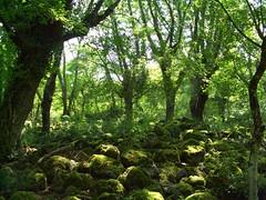 Il bosco incantato (foto_lamone) Tags: colatalavica selvadellamone wwwselvalaomoneit