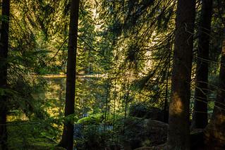 Kleiner Teich im Wellertal / Fichtelgebirge