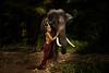 Thai models (furbs01 Thanks for 4,325,000 + views) Tags: thailand thaigirl elephant chiang mai jungle beauty fantasticnature