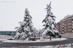 """La Rotonda del """"Puente de Madera"""" nevada./ The snowy """"Puente de Madera"""" Roundabout. (Recesvintus) Tags: albacete puentedemadera rotonda parquelineal roudabout trees árboles snow snowy nevado nieve nevada snowfall winter invierno 2009 españa spain recesvintus"""