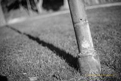 Shadows (Capturedbyhunter) Tags: fernando caçador marques fajarda coruche ribatejo santarém portugal pentax k1 revuenon 112 12 f12 55mm 55 mc monocrome monocromático black white preto e branco manual focus focagem foco bokeh