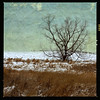 Lonely Tree (Dave Linscheid) Tags: tree winter snow farmfield agriculture rural farm country texture textured butterfield watonwancounty mn minnesota usa