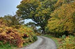 Country lane on the Long Mynd, Shropshire (Explored) (Baz Richardson (catching up again!)) Tags: shropshire thelongmynd countrylanes narrowlaneschurchstretton hills areasofoutstandingnaturalbeauty shropshirehills explored