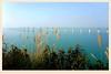 港珠澳大橋   The Hong Kong Zhuhai Macao Bridge (C. Alice) Tags: bridge winter sea blue sky 2016 ilce6000 sony a6000 sonya6000 hongkong asia sonyepz1650mmf3556oss saariysqualitypictures favorites50 aatvl01 1000v40f 1000views