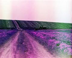 Somewhere near Big Sur coast (Joe Ascioti) Tags: mamiya rz 67 120mm film lomochrome purple 400 california big sur yosemite national park c41