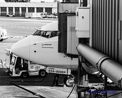 B&W Look at 737-900ER at Sea-Tac Gate (AvgeekJoe) Tags: iflyalaska 737990 737990erwl alaskaair alaskaairlines bw blackwhite blackandwhite boeing737 boeing737900 boeing737990 boeing737990erwl d5300 dslr jetliners ksea n434as nikon nikond5300 other seatac seatacairport seattletacomainternational seattletacomainternationalairport aircraft airplane airport aviation jetliner noseshot plane