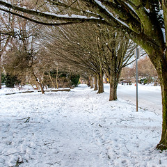 snow on 7th (Ben McLeod) Tags: portland sellwood sellwoodbluff sellwoodpark winterstorm snow
