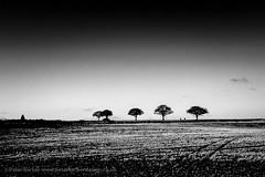 Stonnall, Staffordshire (Peter Barker) Tags: ©copyrightpeterbarker stonnall staffs staffordshire blackandwhite monochrome highcontrast trees graduated sky field pentaxq