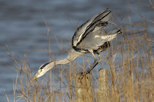 """ Clear for take off Heron one """