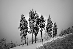 Gestern auf dem Feldberg (pwendeler) Tags: mountain berg feldberg baum tree snow schnee gipfel summit hessen hesse natur nature sonynex7 unserberg