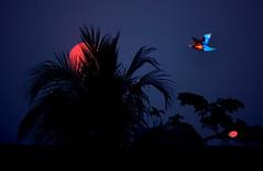 dawn of dhaka city (bimboo.babul) Tags: dawn wntermorning sunrising dhaka street billboard advertise streetlight
