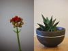 Houseplants (Alex Fordham) Tags: houseplants interior cactus flower macro colour green red grey