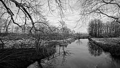 Landgoed Nemelaer (Bart K. Prins) Tags: nikon coolpixa blackandwhite bw monochrome trees water reflections