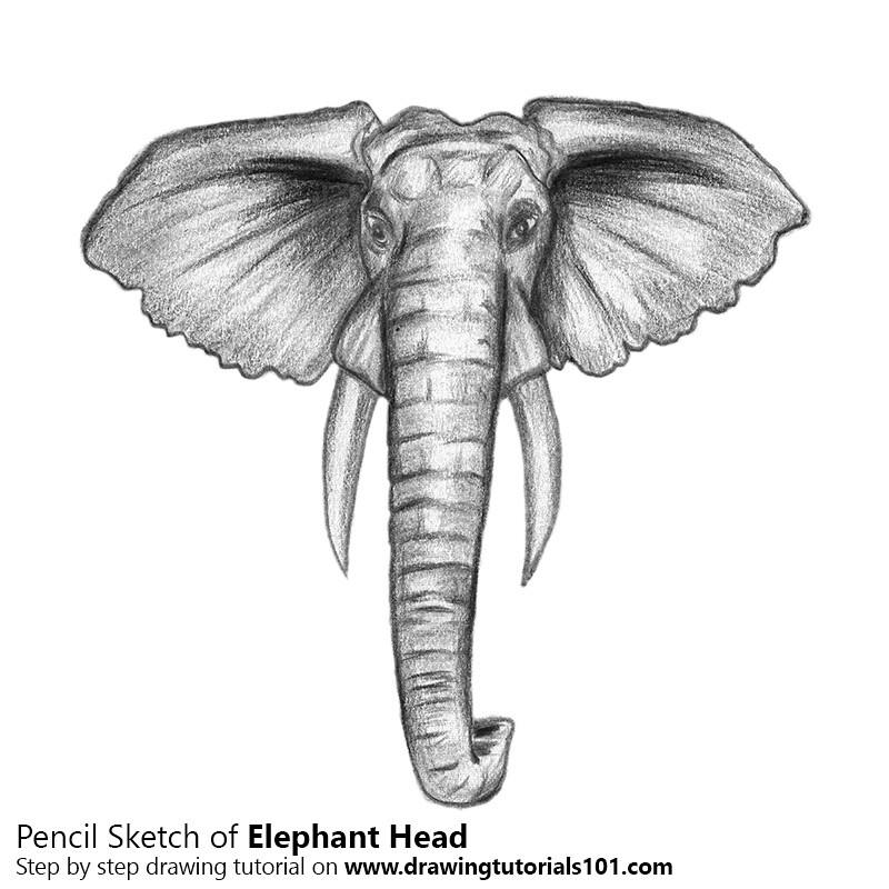 The World S Newest Photos Of Elephant And Sketching Flickr