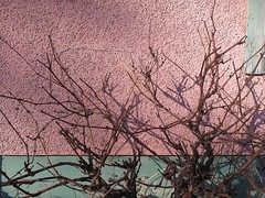 Fragment ... (Beeke...) Tags: light shadows walls fragments details pink minimalist brancheswinestock grapevine bare branches