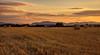 _landscape photographer_ (* landscape photographer *) Tags: italy europe tramonto valle natura giugno paesaggio collina oro balle lucania 2015 mietitura nikond90 salvyitaly