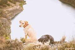 Desert dogs by Deep Lake (johnwporter) Tags: hiking scramble backpacking mountains easternwashington washington desert deeplake lake labrador yellowlab 徒步 爬行 背包旅行 山 華盛頓東部 華盛頓州 荒漠 深湖 湖 拉布拉多 黑拉不拉多 黃拉不拉多 coulee 深谷 blacklab