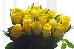 Dozen Roses (bluehazyjunem) Tags: pentaxk70 tamron90