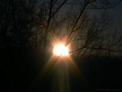 Winter (Natali Antonovich) Tags: winter tervuren belgium belgie belgique nature christmas christmasholidays parallels sun tree