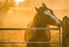 New Years Eva (d.g.photos) Tags: eva parc horse equine welsh cob newyearseve sunset sun light