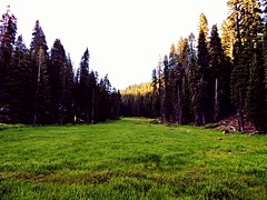 looking for space... (BillsExplorations) Tags: meadow space lush green trees valley mountains sequoianationalpark california open peace scenic landscape sunset