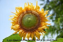 Happy New Year (Tungmay aka Κώστας) Tags: sunflower flower plant