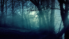 Misty forest (MongooseArt) Tags: fog mist misty wallpaper forest road winter london park ravensbury england canon photoshop filter photography nature morning moody woods