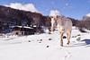 Donde el corazón te lleve (Japo García) Tags: caballo nieve blanco casa chimenea frío paisaje bosque caminar uno manchas campo montaña invierno