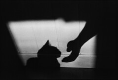 Mimine (JacobR97) Tags: arista400 1600iso pushed standdeveloped r09 rodinal nikonf100 nikon50mmf14 microtekartixscanf2 cat shadow