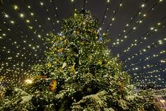Holidays in Kiev (meleshko.alex) Tags: europe ukraine kiev new year christmas holidays night nightlife longexposure trees tree fujifilm fuji fujinon xt1 1024mm
