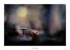 La danse de la pluie (Naska Photographie) Tags: naska photographie photo photographe paysage proxy proxyphoto macro macrophotographie macrophoto mushroom champignon nature forest foret landscape pluie rain eau water color couleur bokeh