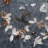 (nolando) Tags: nolando 2017 simple square decay life organic leaves hiver city minimal canon