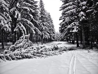 Forêt du Ché, ce dimanche