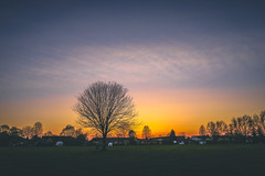 same pic, different edit (viewsfromthe519) Tags: sunset sky skyscape clouds silhouette tree park optimist stthomas ontario spring canada nature orange blue golden yellow
