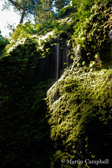 Moss (Oneota Gorge) (campmusa) Tags: water oregon moss waterfalls ferns columbiarivergorge i84 mosses nikonlens oneontafalls oneontacreek oneotagorge hepaticsandlichens may2015 nikond750