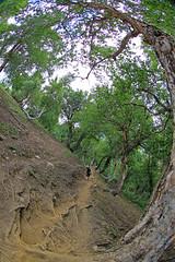 DAY 01 (20) (AvijitNandy) Tags: mountain lake fish reflection forest trek river kashmir wildflower milkyway sonamarg canon1dmarkiv gangaballake gadsarlake canon815f4fisheye kashmirgreatlaketrek satsarlake