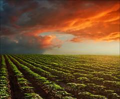 Sunset (Katarina 2353) Tags: sunset sky cloud film nature field clouds landscape nikon outdoor dramatic fields agriculture clod katarinastefanovic katarina2353 serbiainspired