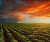 Sunset (Katarina 2353) Tags: sunset landscape fields clouds agriculture serbiainspired dramatic sky clod outdoor field film katarinastefanovic katarina2353 cloud nikon nature explored